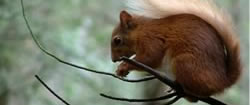 Red Squirrel Log Cabin Moray Scotland Accommodation Speyside